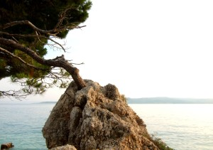 Tree_on_the_rock