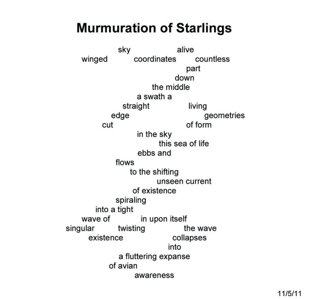 2110MurmurationofStarlings