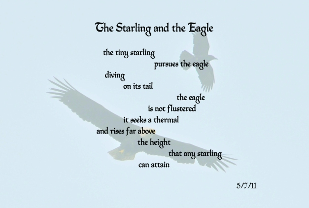 799Starling&Eagle